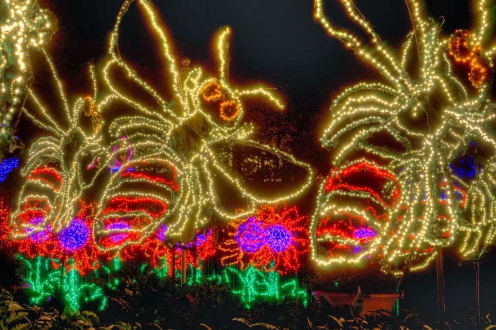 Gorgeous holiday lights at atlanta botanical gardens gac Atlanta botanical gardens christmas lights