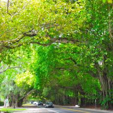 Old Cutler Road in Coral Gables