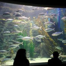Henry Doorly Zoo and Aquarium, Omaha, Nebraska