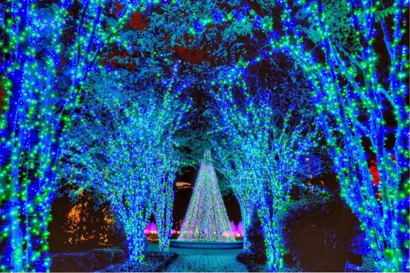 Atlanta Botanical Gardens Holiday Lights, Twinkle